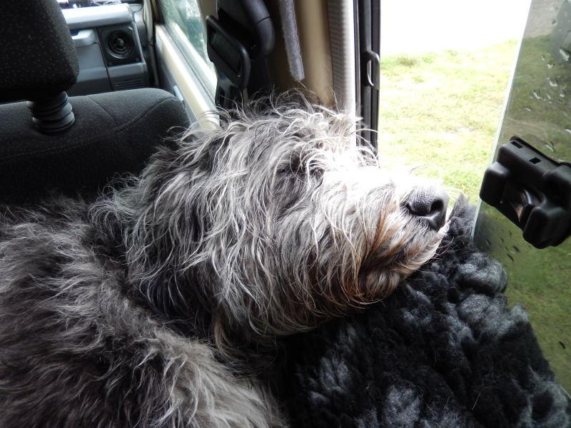 ohne Gebell von Streunerhunden
