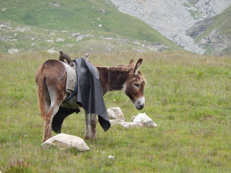 der Esel vom Hirten