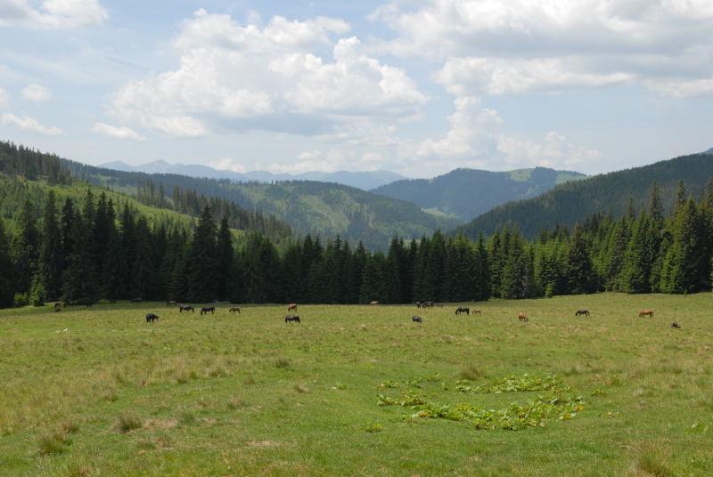 Pferdefarm mit über 400 Pferden