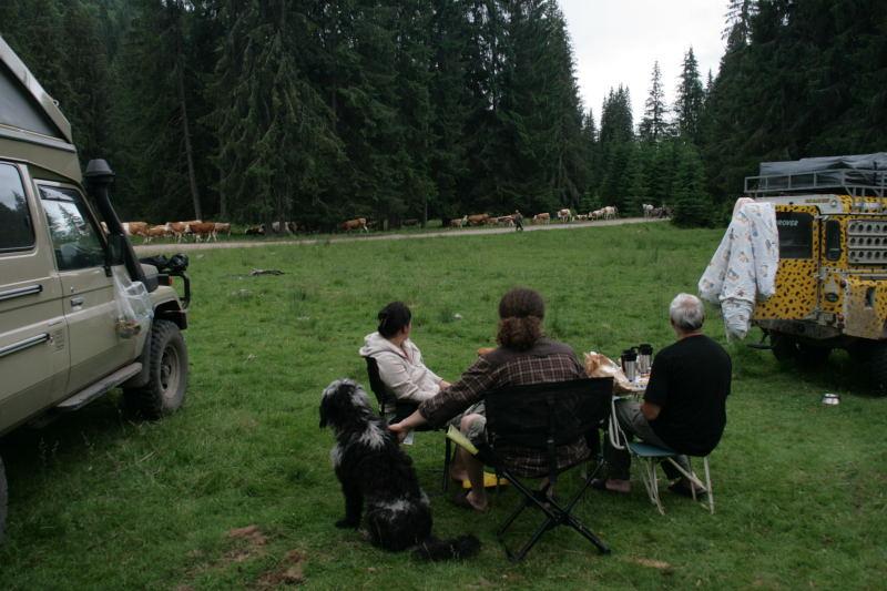 am nächsten Morgen kommen mehrere Herden vorbei