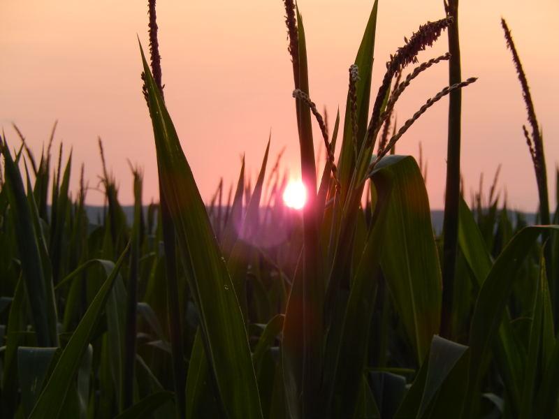 Übernachtung im Maisfeld