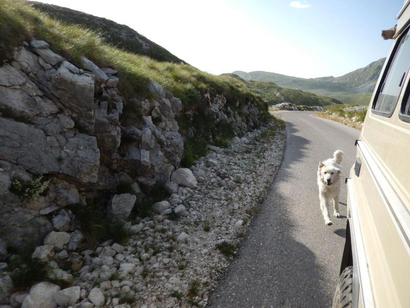 Hütehund verfolgt unseren bellenden Jeep