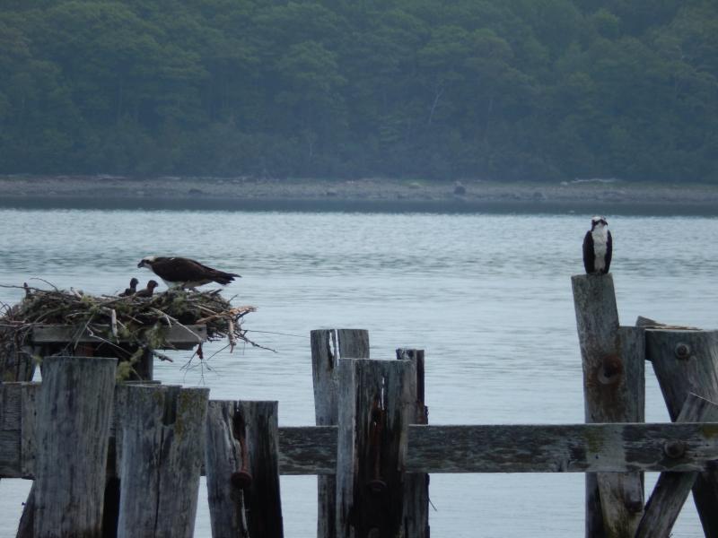mit Vogelbeobachtung