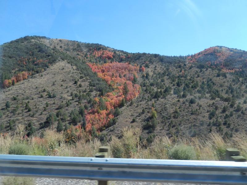 wow, schon Herbstfarben