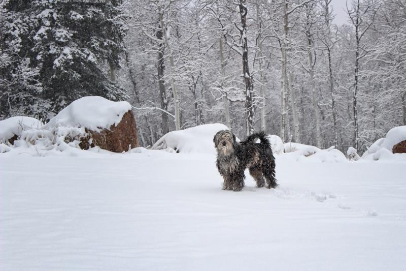 Foppolo liebt Schnee