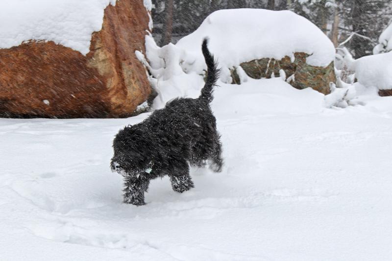 Anthonys erster Schnee