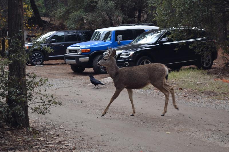kleine Deers