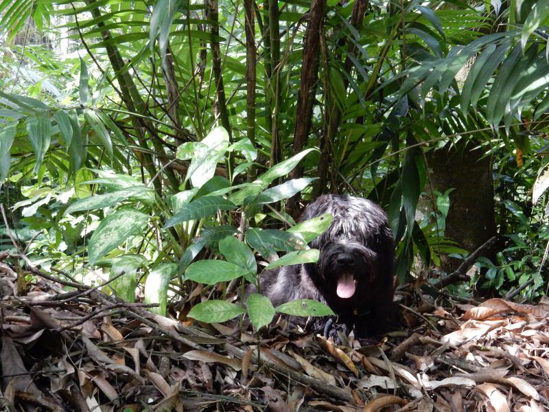 im Schatten des Dschungels
