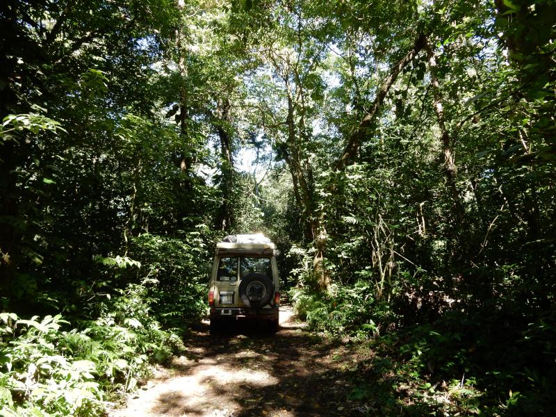 raus aus dem Dschungel