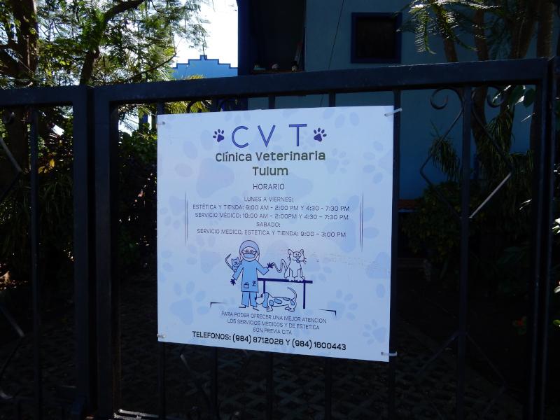 Tierarzt in Tulum