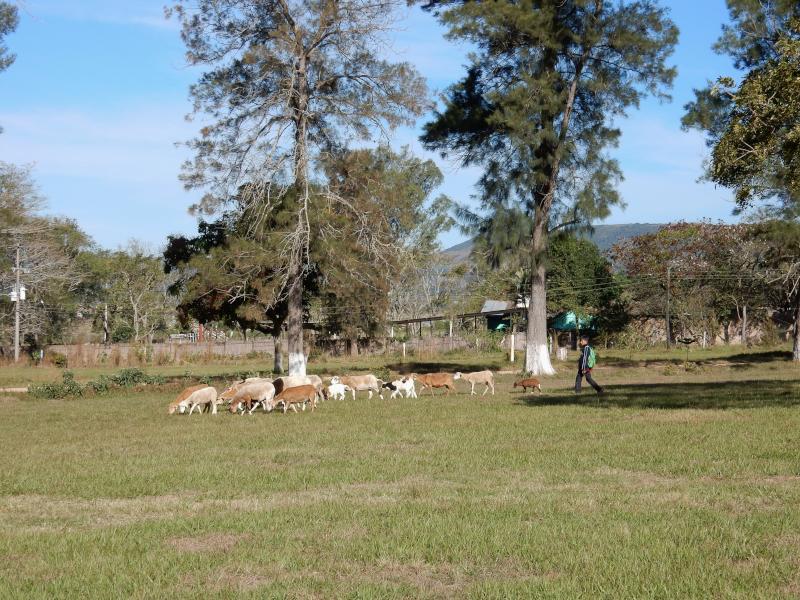 Schafe vom Kinderheim