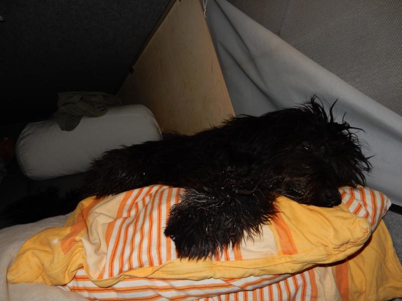 Anthony im falschen Bett