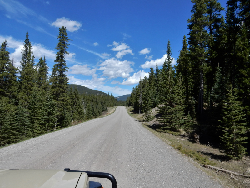 Forestry Trunk Road