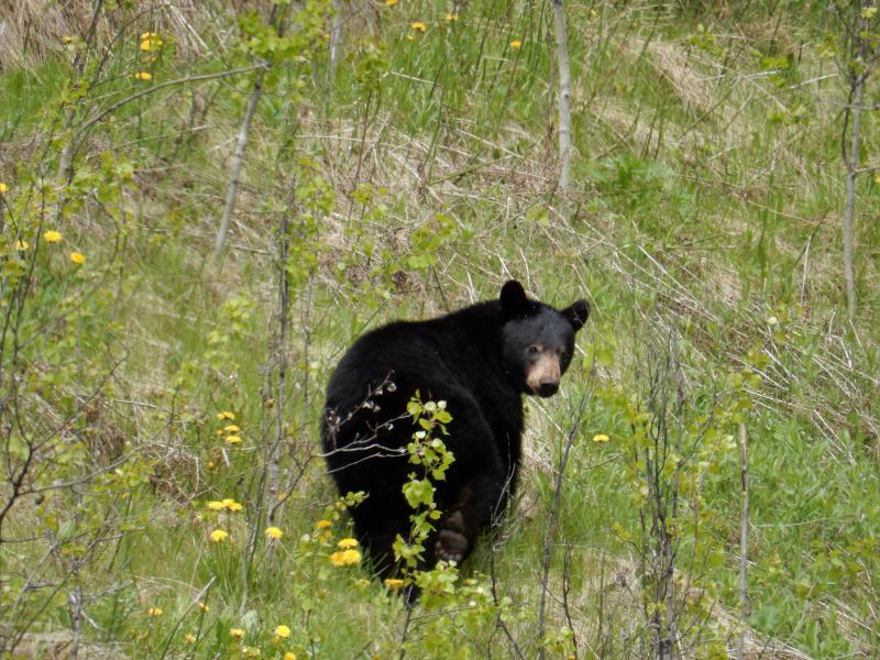 für die Bären