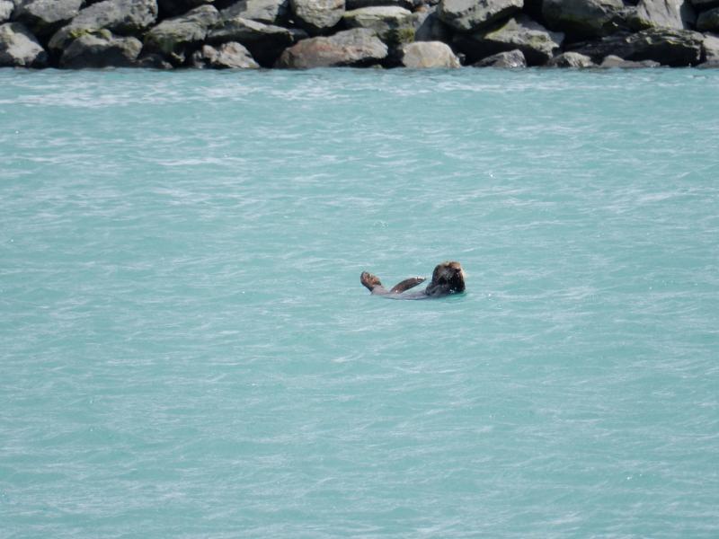 nein ein Seeotter