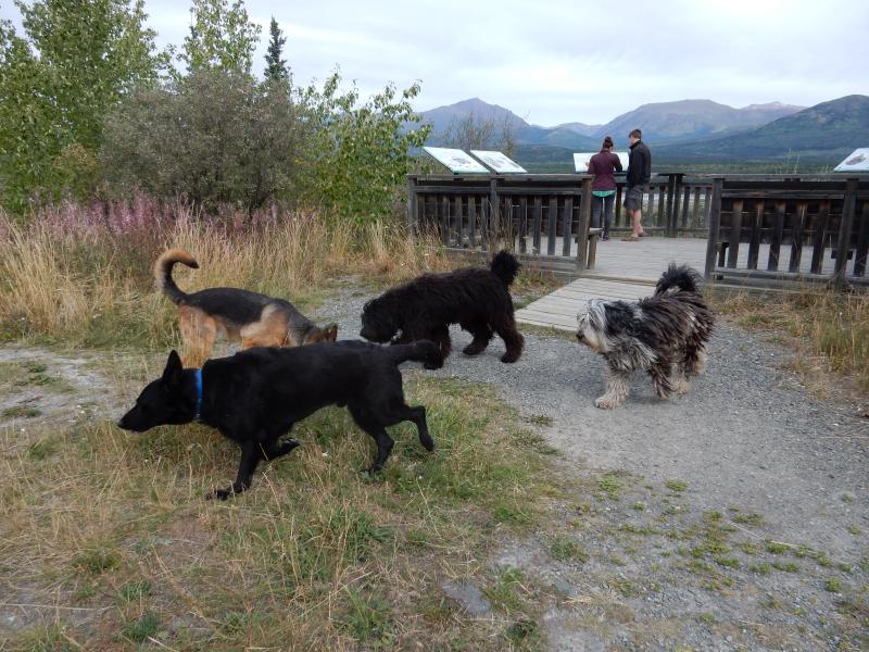 Hunde Plausch