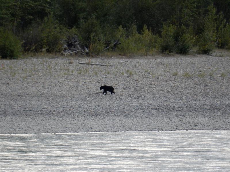 der Bär kommt grad aus dem Wasser
