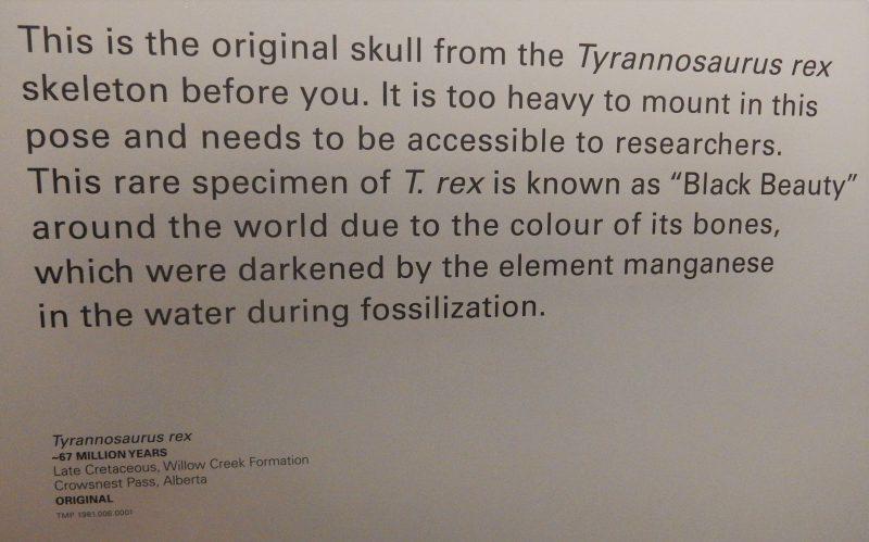 im Dino Museum