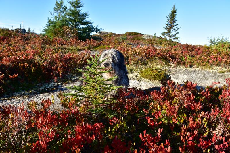 Herbstfarben bei sommerlichen Temperaturen